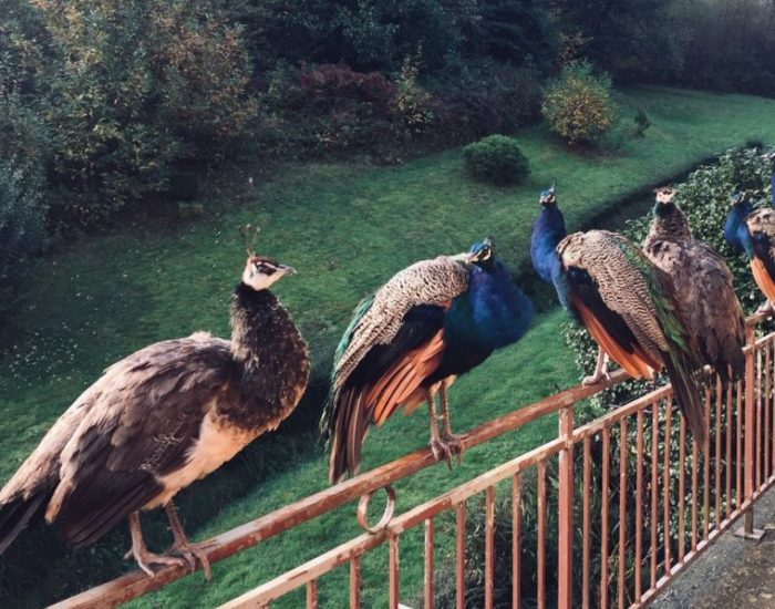 Mes beaux oiseaux