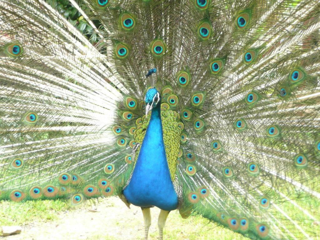 Mon bel oiseau