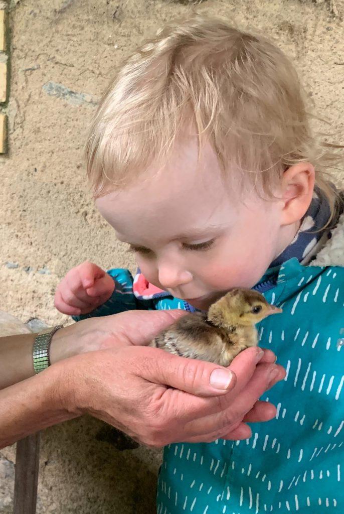Enfant avec un petit poussin-paon