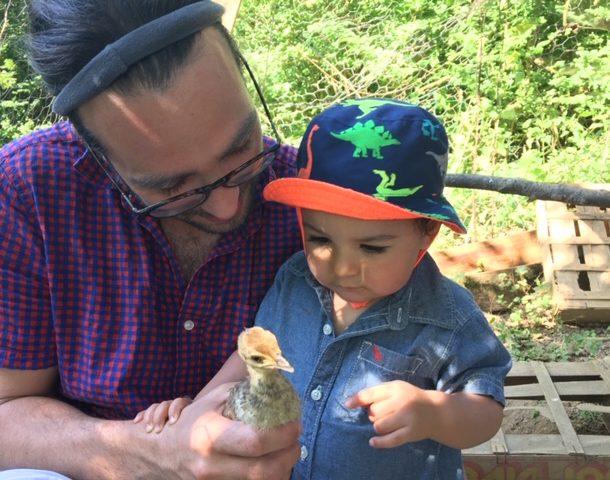 Un enfant regarde intrigué un jeune poussin que son papa tient dans la main. Villa Tranquillité