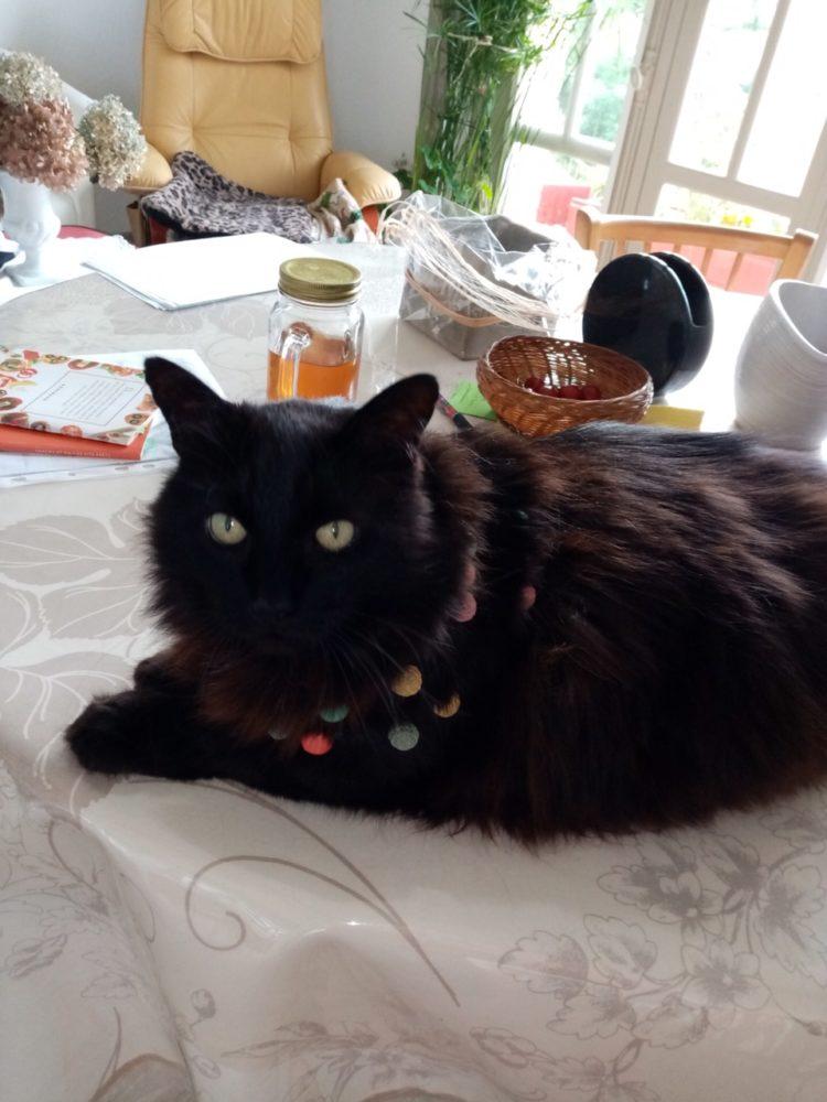 Mon chat Carbone avec son collier de perles