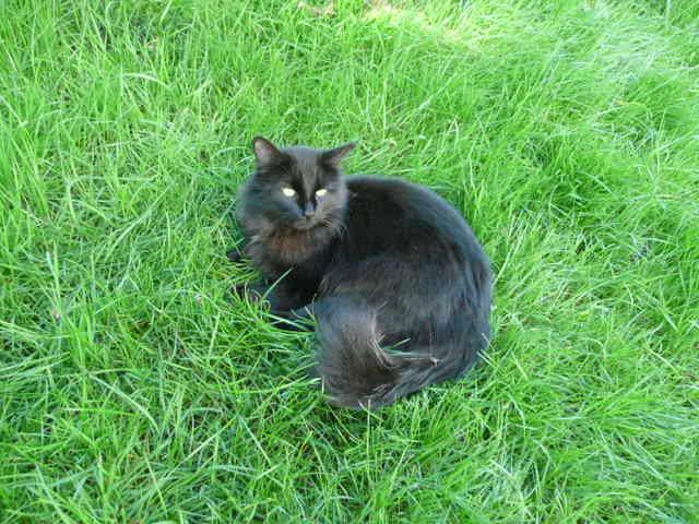 Qu'il est joli mon chat Carbone tout noir dans la verdure du jardin!