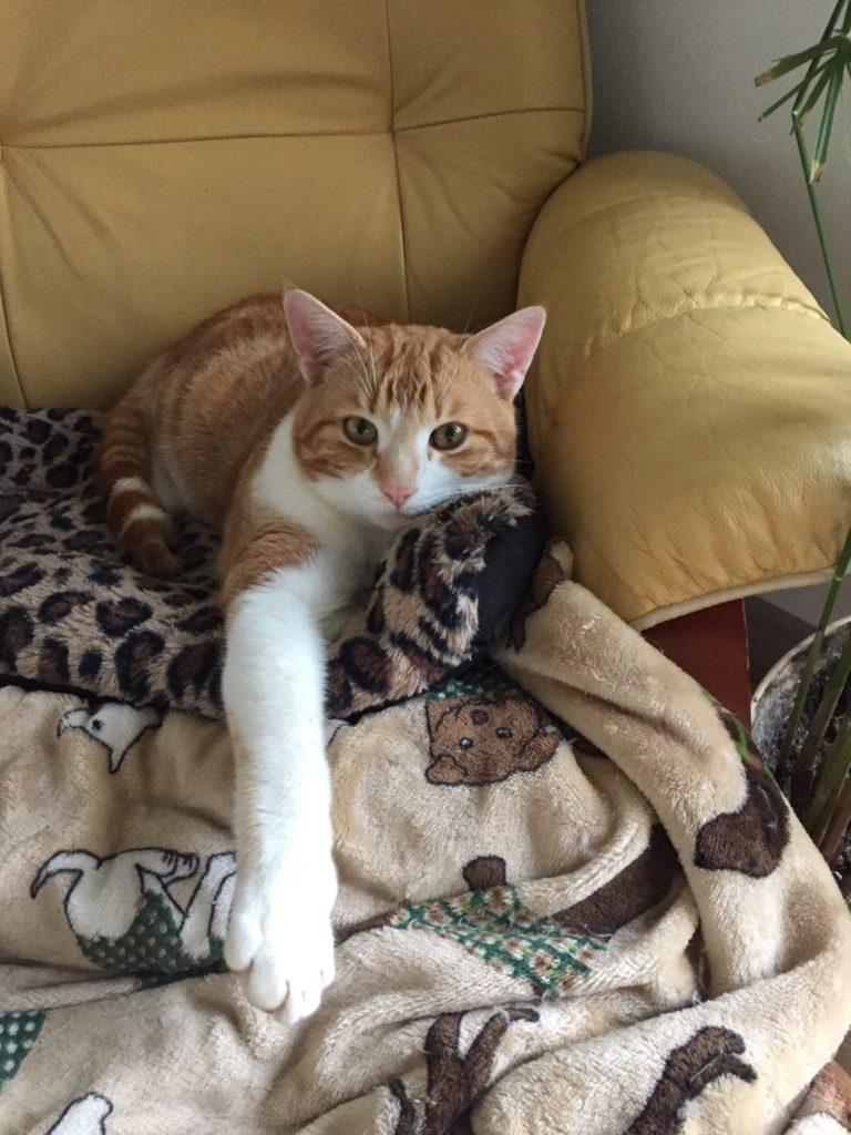 Tigrou, mon petit chat roux, adore s'installer dans le stressless