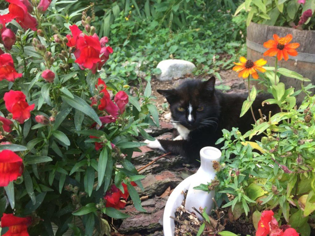 Apache, mon chat, aime bien fair la sièste au milieu des fleurs